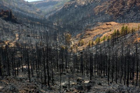bosques-quemados