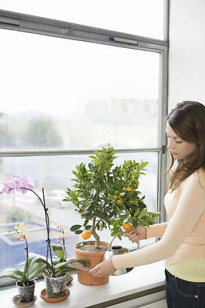hogar-plantas