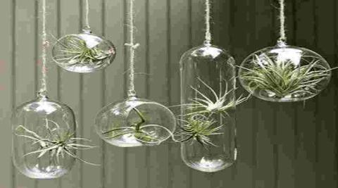 jardin-en-casa-decoracion-cristal