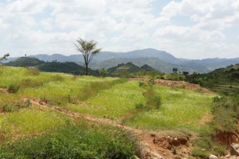 medio-ambiente-naturaleza-campo